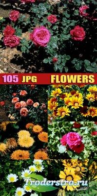 Клипарт для фотошопа -  Цветы