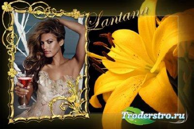 Рамочка для фотошопа - Восхитительная лилия