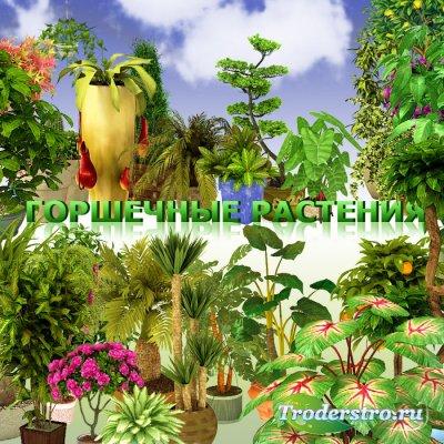 Горшечные растения, цветы в PSD - Клипарт для фотошопа