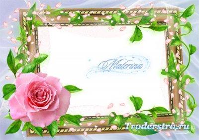Фоторамка для фотошоп - Розовая  роза