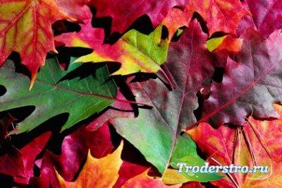 Клипарт для фотошопа - Яркие краски осени