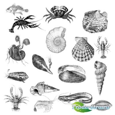 Кисти для фотошопа - Морские обитатели