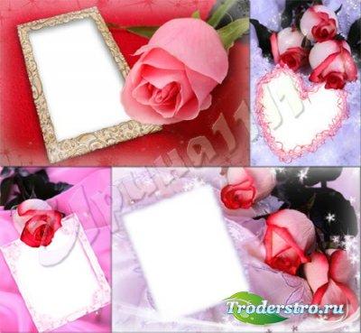 Набор романтических рамок с розами для фотошопа