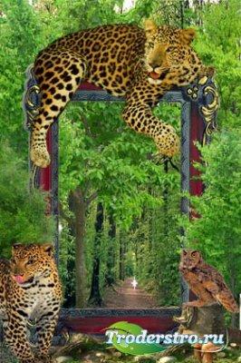 Рамочка для фотошопа - Тигровая