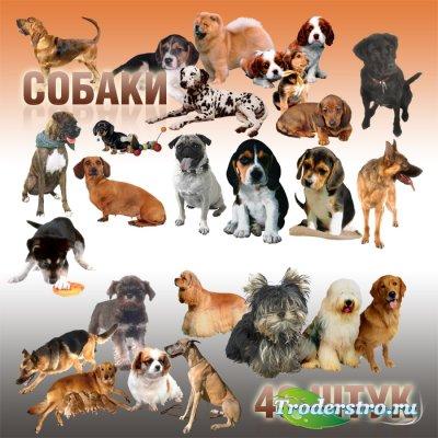 Собаки, щенки - PSD Клипарт (46 штук)