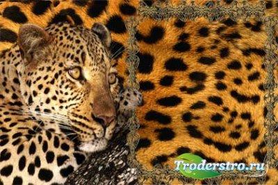 Рамка для фотошопа - Тигр
