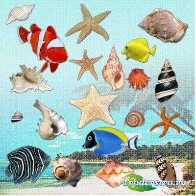 Клипарт для фотошопа - Ракушки, морские звёзды и рыбки