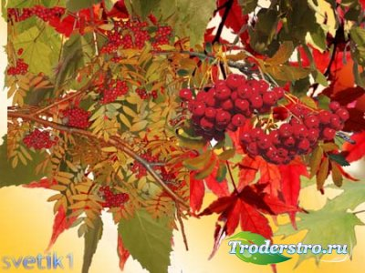 Клипарт - Осенние ветки