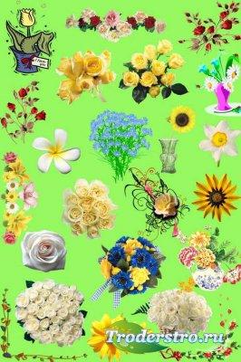Клипарт - Цветы и букеты