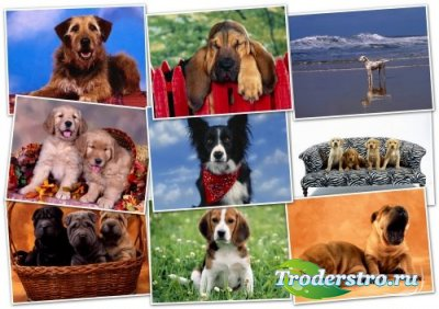 Обои HQ качества - Wallpapers pack 1600x1200 Dogs