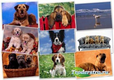 Обои HQ качества - Wallpapers pack 1600x1200 Dogs