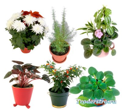 Растровый клипарт - Комнатные растения