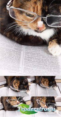 Stock Photos - Читающий кот