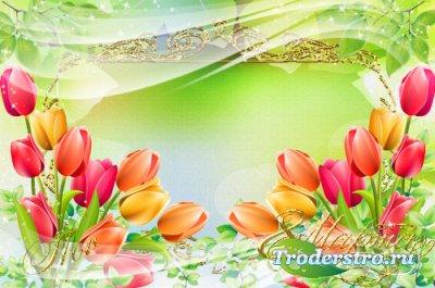 Рамка для фотошопа - Нежные тюльпаны