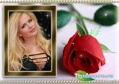 Рамка для фотошоп - Роза