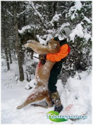 Шаблон для фотошоп – Охота на пуму