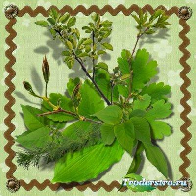 Клипарт - Весенние листья