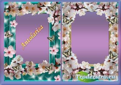 Рамочки для фото - Сакура и бабочки
