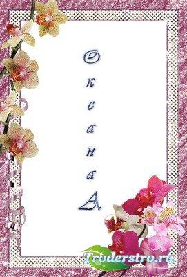 Фоторамка – Орхидеи
