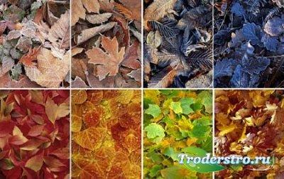 Фоны - Осенняя пора