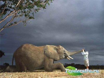 Шаблон для фотошоп - знакомство со слоном