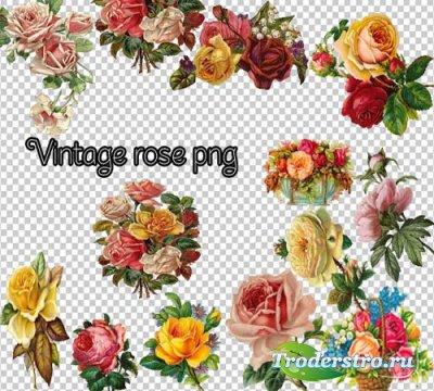 Клипарт - Винтажные розы