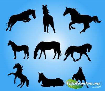 Векторные силуэты лошадей