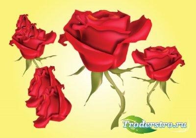 Красная векторная Роза