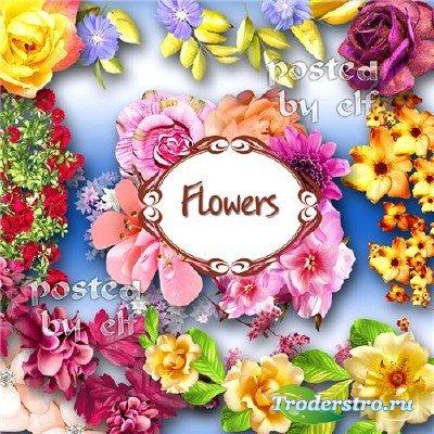 Клипарт PNG (без фона) - Цветочки и букетики