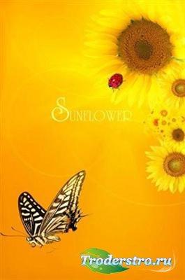 Подсолнухи с божьей коровкой и бабочкой (многослойный PSD)