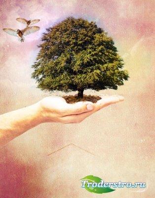 PSD Исходник - Дерево на Ладони