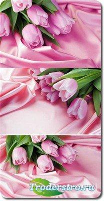Тюльпаны на атласе - фоны (HQ)