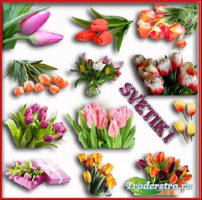 Клипарт - Тюльпаны на прозрачном фоне
