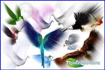 Клипарт - Летящие птицы