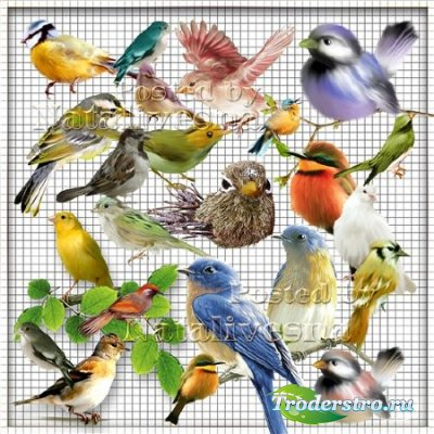 Клипарт на прозрачном фоне – Разноцветные птички – невелички…