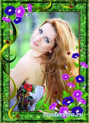 Цветочная рамка для фото - Яркие вьющиеся цветки ипомеи