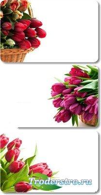 Корзинки с тюльпанами - набор весенних фонов