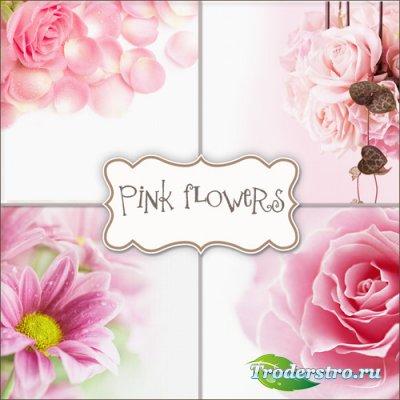 Фоны - Цветущие розы