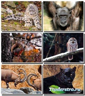 Новые обои - Эти забавные животные
