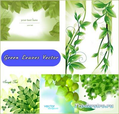 Свежие весенние зеленые листья с водяными каплями (Вектор)