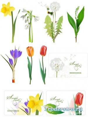 Одуванчик, ландыш, тюльпаны и дизайн карточек (Вектор)