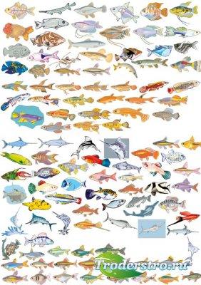 Коллекция рыб (Вектор)