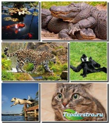Новые обои - Эти забавные животные (Часть 3)