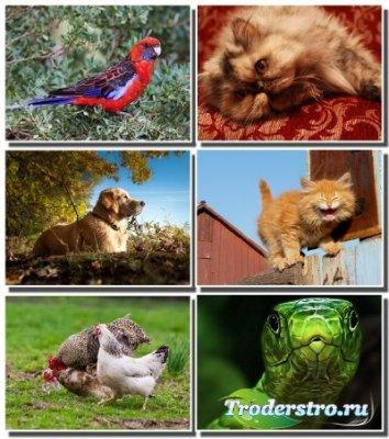 Новые обои - Эти забавные животные (Часть 4)