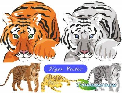 Амурский и бенгальский тигр (Вектор)