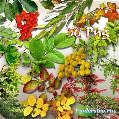 PNG клипарт - Разнообразная листва, деревья, плетущаяся зелень