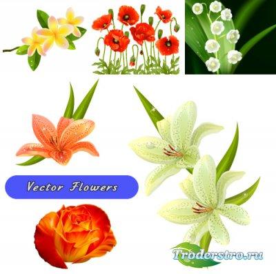 Векторные цветы - Ландыши, маки, лилии