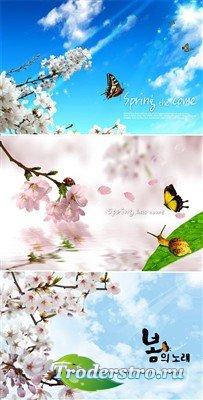 Сакура в цвету (многослойные PSD)