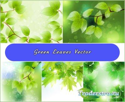 Свежие кленовые листья (Вектор)