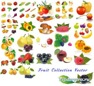 Фруктовая и овощная коллекция перец, морковь, кокос (Вектор)
